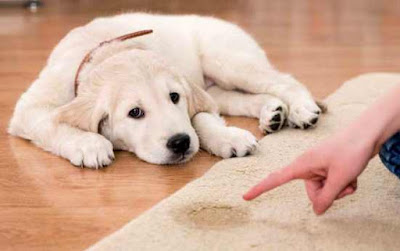 Rules in Giving Your Puppy Healthy Dog Treats