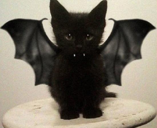 Fantasias Halloween - Gato Morcego