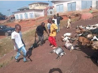 Youths Kill All Pets, Livestock Seen On The Street, As Oba Of Ifaki Dies