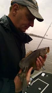 susquehanna smallmouth bass
