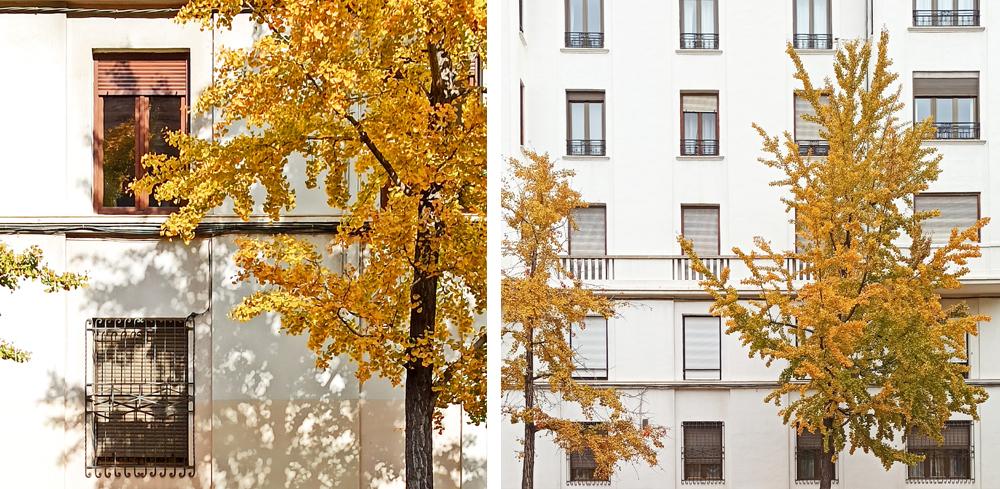 ventanas zaragoza fotografía