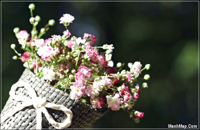 ảnh bó hoa đẹp