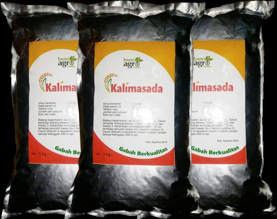 Padi Kalimasada, Padi Unggul Kalimasada, Bumi Agro Nusantara, Benih Unggul, Padi Kalimasada 2019, Padi Kalimasada 2018, Padi Kalimasada 2020,