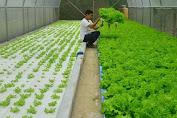 Bonus Demografi Perlu Dioptimalkan Untuk Regenerasi Sektor Pertanian