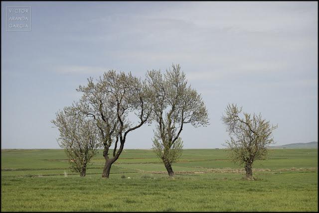 fotografía, naturaleza, paisaje, Zaragoza, árboles, campo
