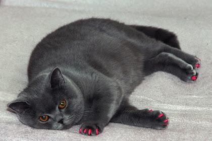 Adityappi Berbagi Informasi Seputar Kucing