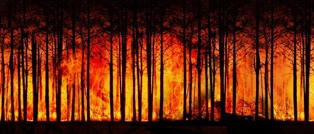 kebakaran-hutan-kabut-asap