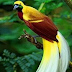 Flora dan Fauna Identitas 34 Provinsi Di Indonesia
