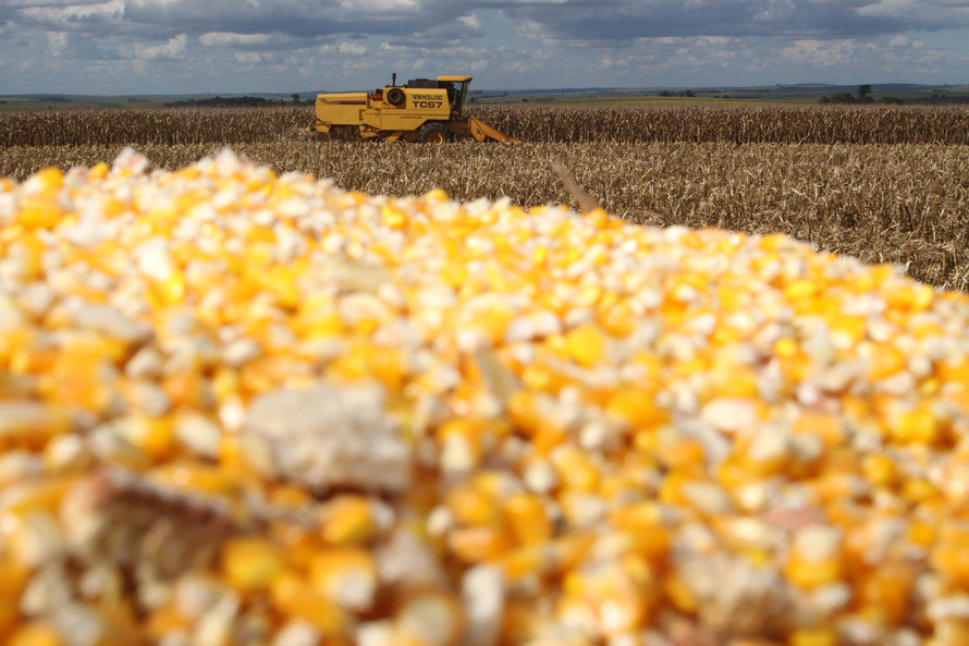 Cantu em Foco - Boletim agropecuário ressalta bons preços do milho ao produtor