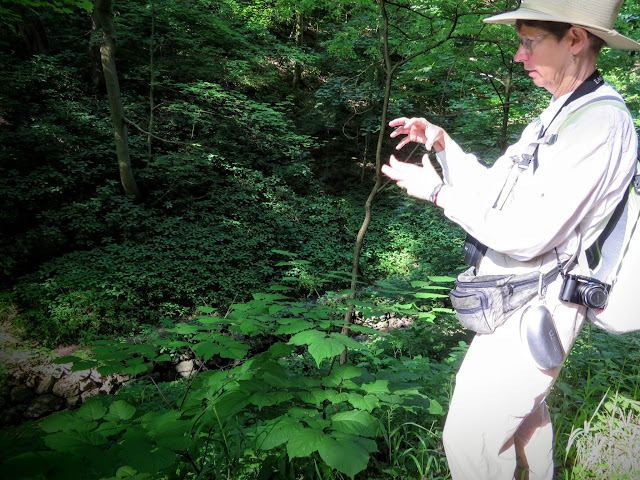 Kate St. John on a free birding and nature walk in Pittsburgh's Schenley Park