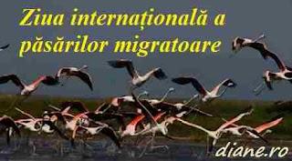 9 mai 2020: Ziua internațională a păsărilor migratoare