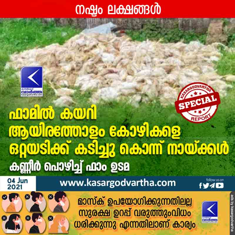 Kerala, News, Top-Headlines, Kasaragod, Chicken, Farm workers, Farm, Dog, Street dog, Dogs killed thousands of chickens from farm.