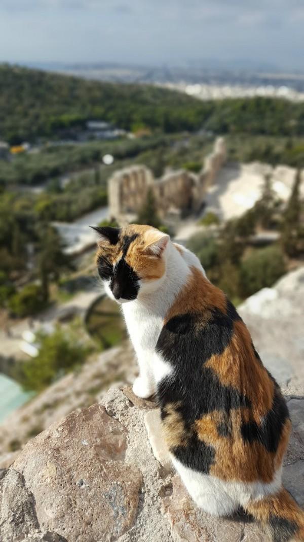 acropolis cats