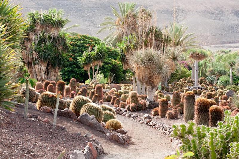 Jard n de cactus y suculentas jard n bot nico fuerteventura for Jardines con cactus y piedras