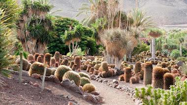 Jardín de Cactus y Suculentas. Jardín Botánico Fuerteventura
