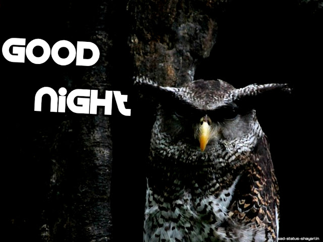 Good night images owl