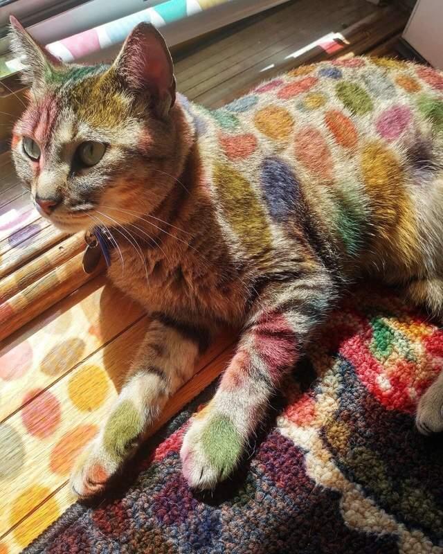 Funny cats - part 252, cute cat images, funny cat photos