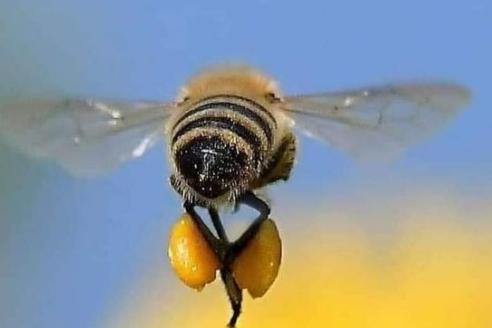 Οι μέλισσες είναι τόσο δυνατές