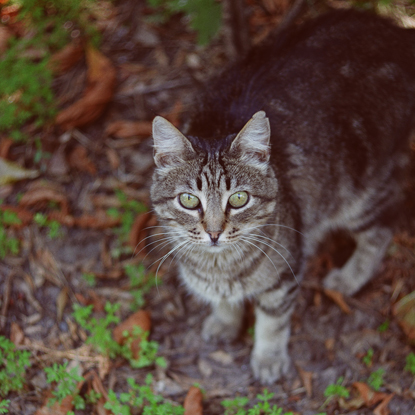 Tabby cat outdoors