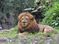 Episode Keempat : Safari Journey, Memasuki Area Binatang Buas di Taman Safari Bogor di saat Pandemi Covid 19