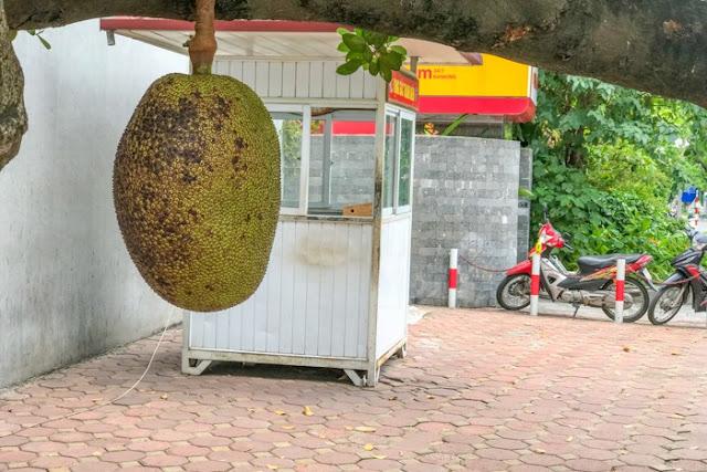 """""""Quả mít an toàn nhất Việt Nam"""" đột nhiên mất tích sau hơn 1 tuần được chia sẻ trên mạng"""