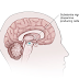 Pseudoparkinsonism - Symptoms, Causes, Treatment