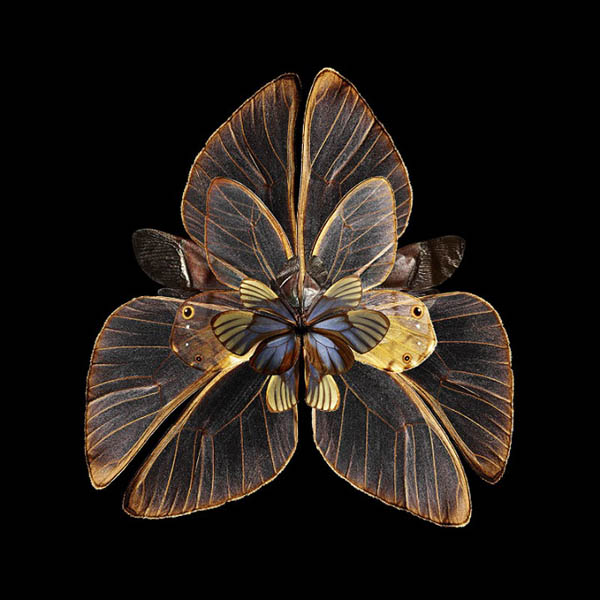 01-Seb-Janiak-Photographs-of-Butterfly-Wings-to-Resemble-Flowers-www-designstack-co