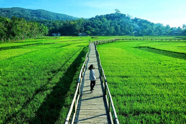 Harga Tiket dan Lokasi Jembatan Sawah Sukorame Bantul