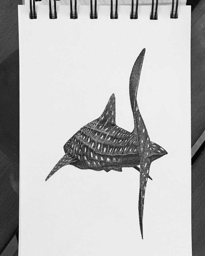 07-Whale-Shark-María-Lecanda-www-designstack-co