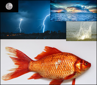 Gold Fish, Ocean, Moon and Sky set against the night