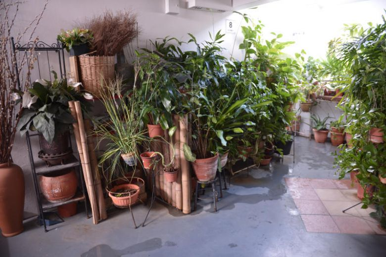 The Straits Times saw about 40 tall potted plants lining the walkway on Monday (May 27)