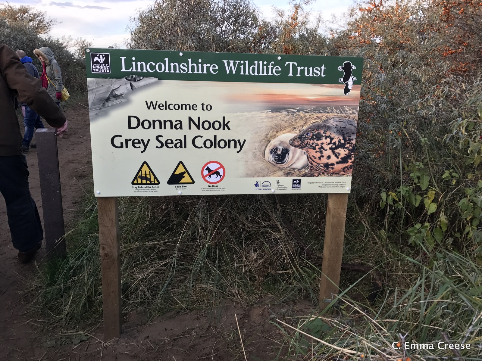 Seal Colony Donna Nook Grimsby Lincolnshire Adventures of a London Kiwi