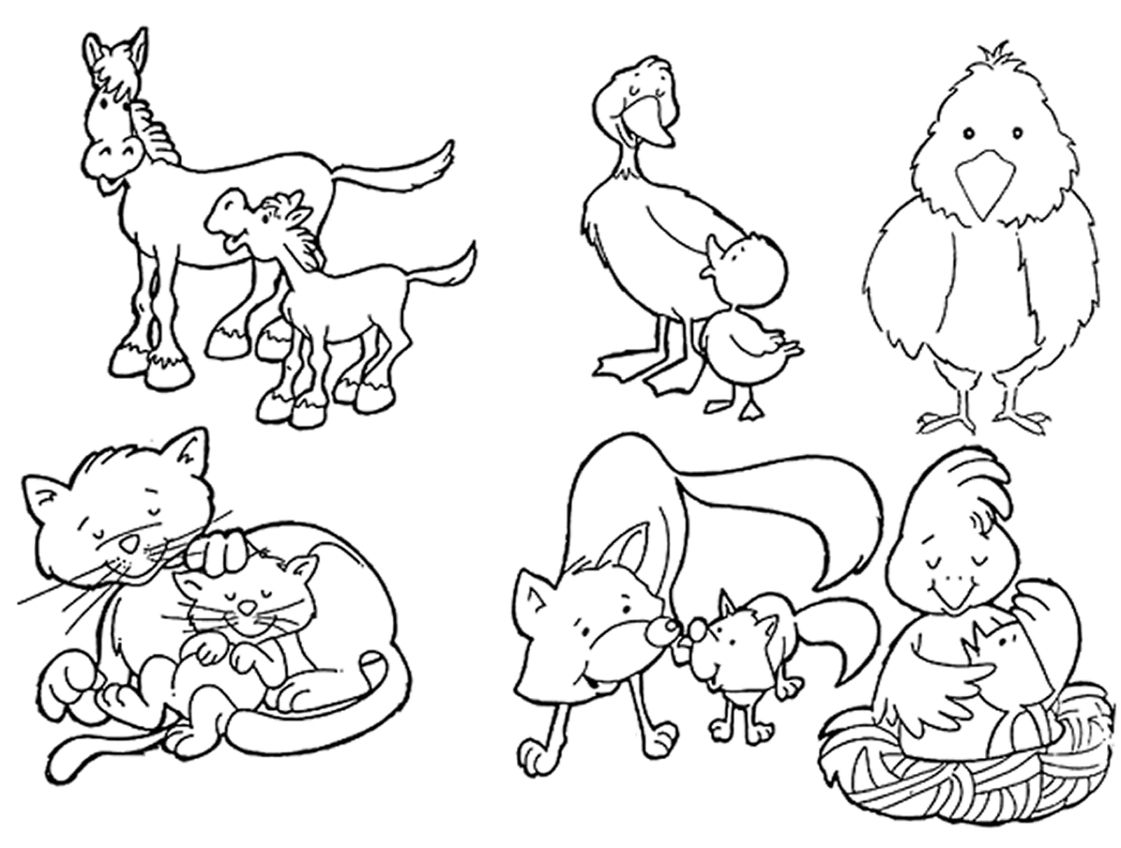 Animales Oviparos Y Viviparos Para Pintar Imagui