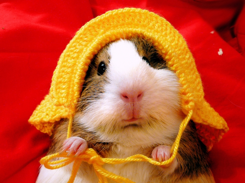 Cute Love Couples Wallpapers For Facebook Hamsters Funniest Fresh Photographs Funny And Cute Animals
