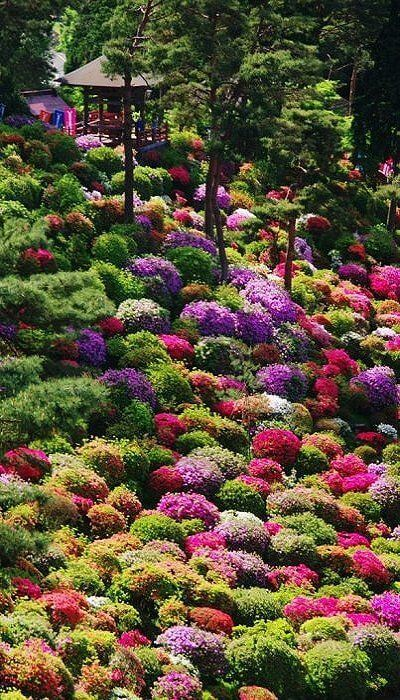 Azalea bushes at Shiofune Kannon Temple, Tokyo, Japan