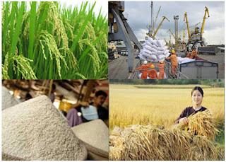 Xuất khẩu gạo của Việt Nam đã có doanh thu tăng mạnh