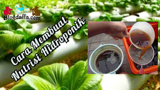 Cara Membuat Nutrisi Hidroponik dari Bahan Limbah