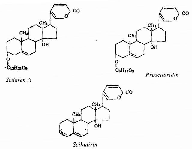 Thành phần hóa học Hành Biển - Scilla maritima - Nguyên liệu làm thuốc Chữa bệnh Tim