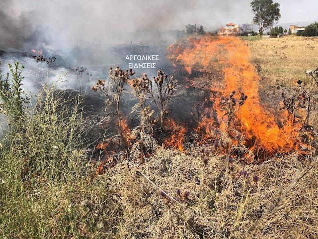 Φωτιά στον Δήμο Επιδαύρου - Πρόλαβε τα χειρότερα το πυροσβεστικό κλιμάκιο
