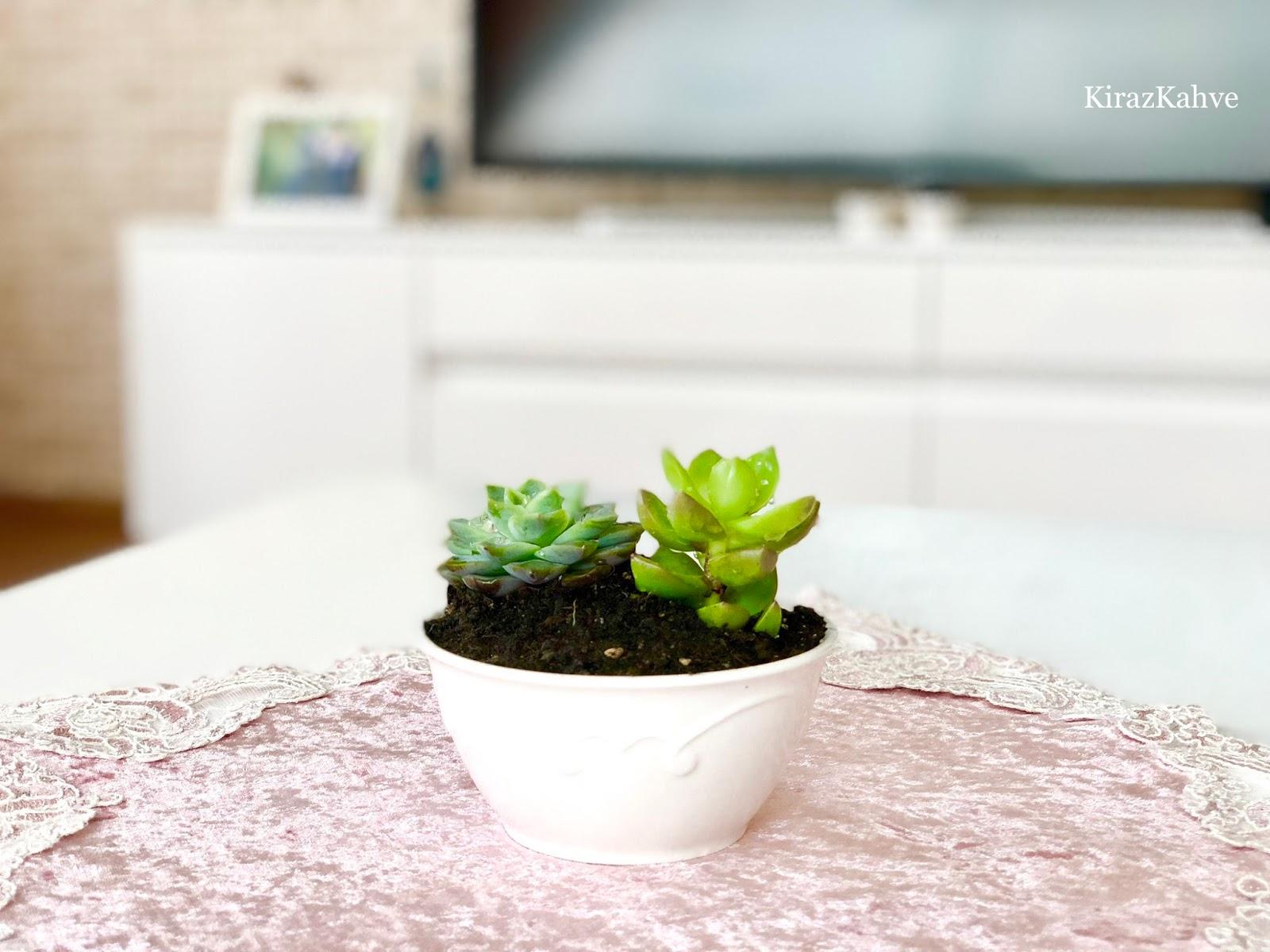 minyatür çiçek