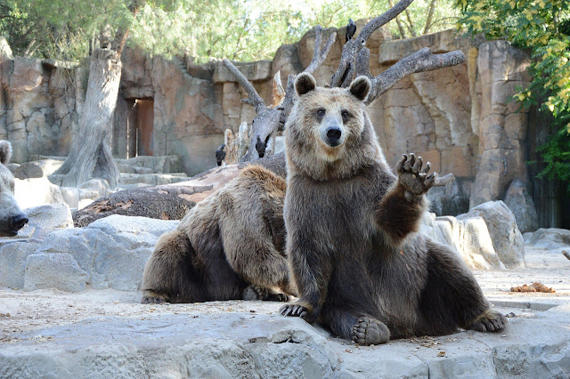 Bear waving while another bear hides behind