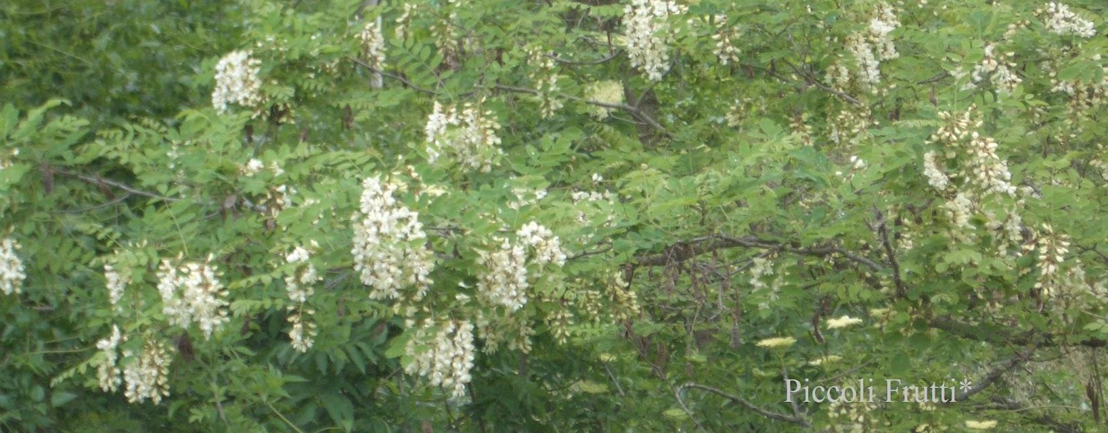 le migliori piante medicinali per dimagrire