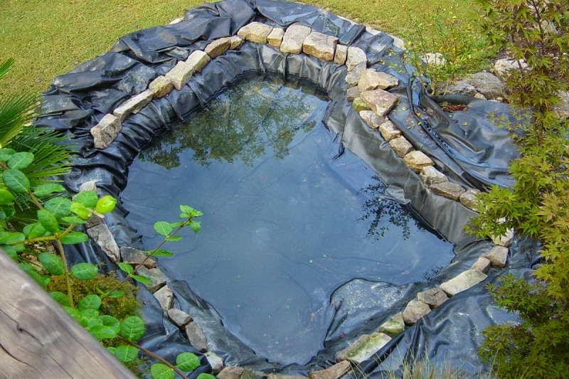 kolam ikan hias sederhana