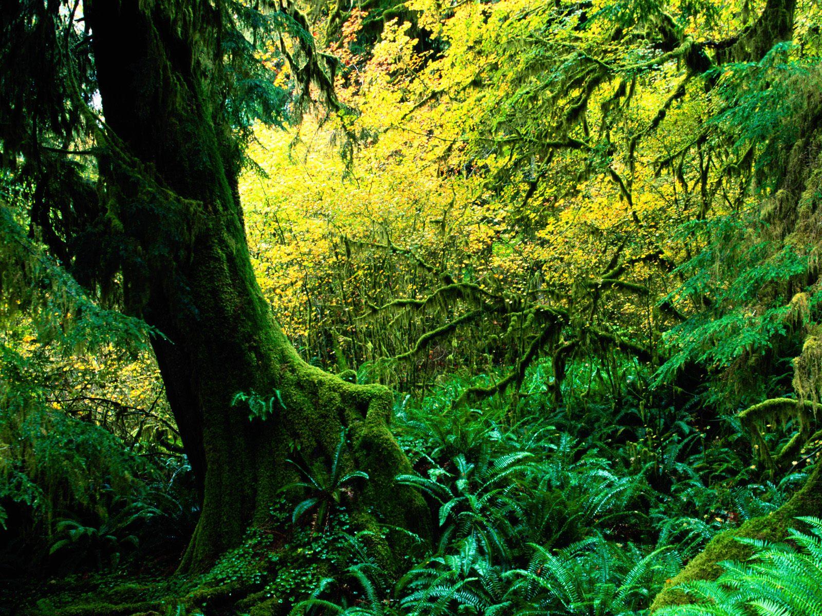 Biboca Ambiental Florestas Tropicais E Seus Impactos
