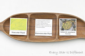 Plants in Antarctica activity with free printable