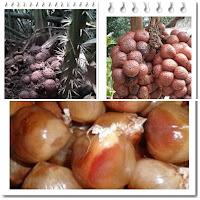khasiat buah kelubi