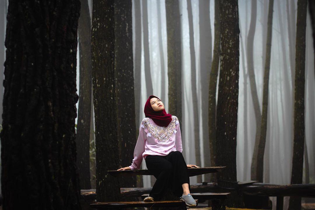 Foto Berkabut di Hutan Pinus Mangunan, Dlingo, Jogja