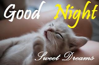 good night sweet dreams cat images