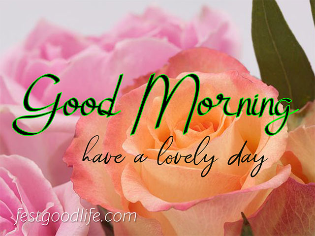 gulab good morning images download