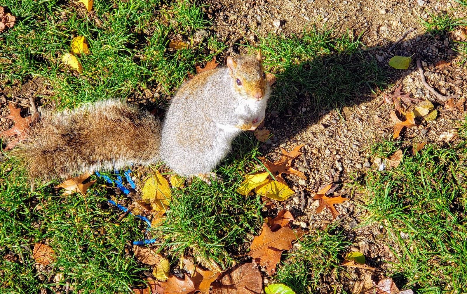 Chi Chi Squirrel